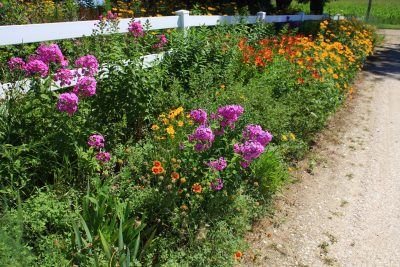 Zone 5 gardens what are the best plants for zone 5 planting in zone 5 gardening tips for zone 5 mightylinksfo