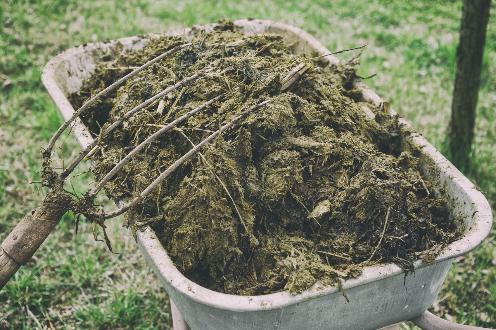 Best Lawn Fertilizer >> Different Types Of Animal Manure: Pros And Cons Of Using Manure As Fertilizer