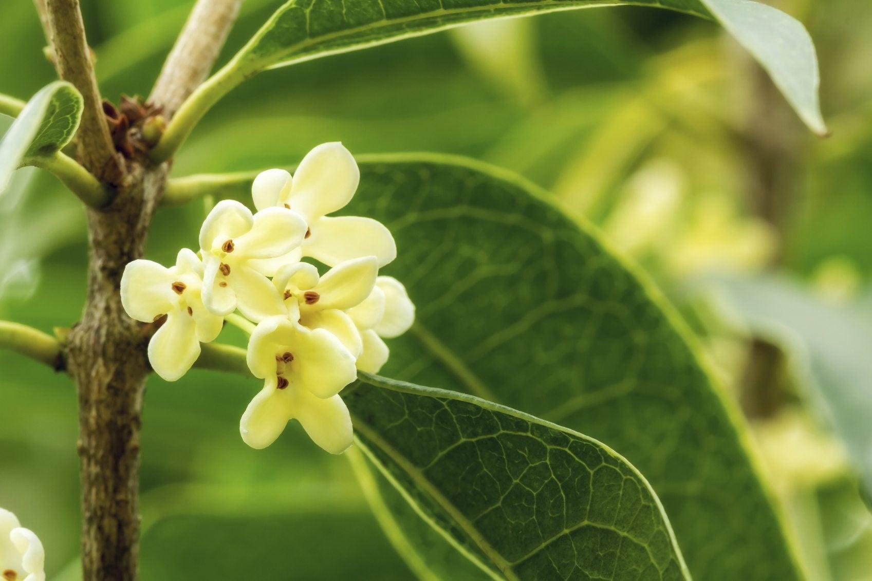 Planting Fragrant Shrubs Choosing Fragrant Bushes For All