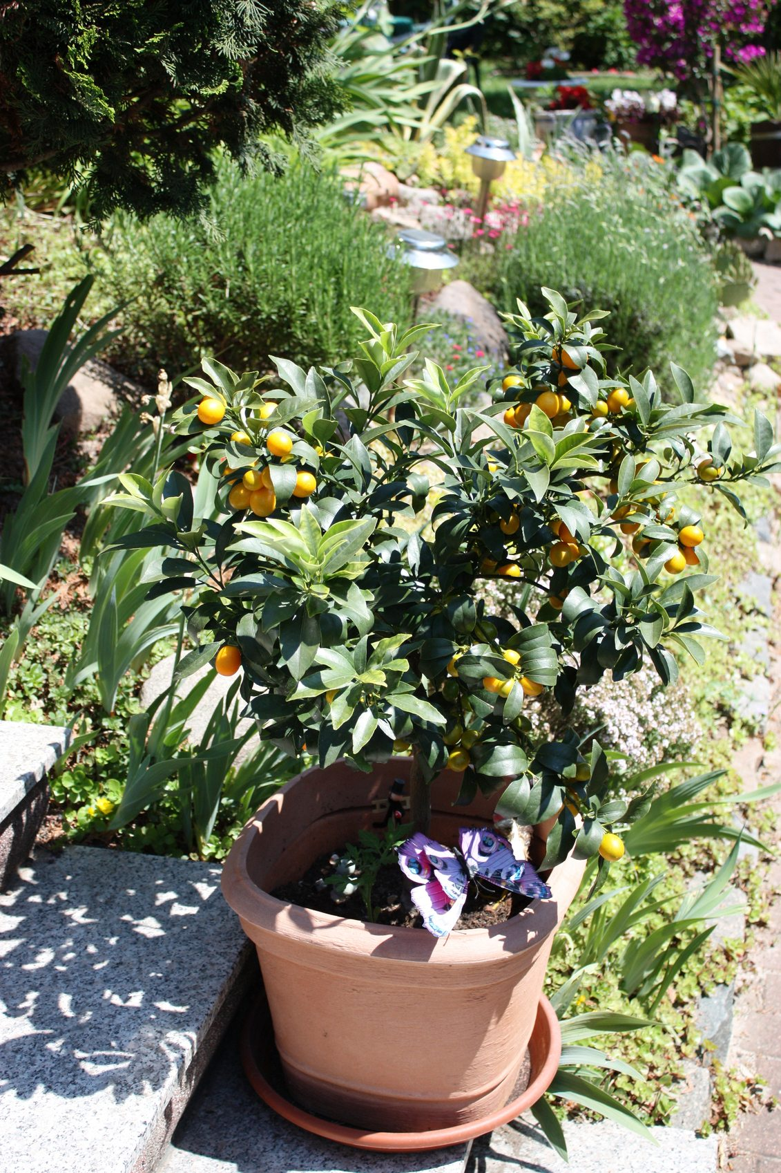 What Grow Well With Fruit: Companion Planting With Fruit Trees