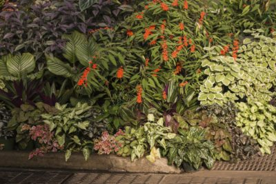 Tropical Shade Garden Plants Tips On Creating A Tropical Shade Garden