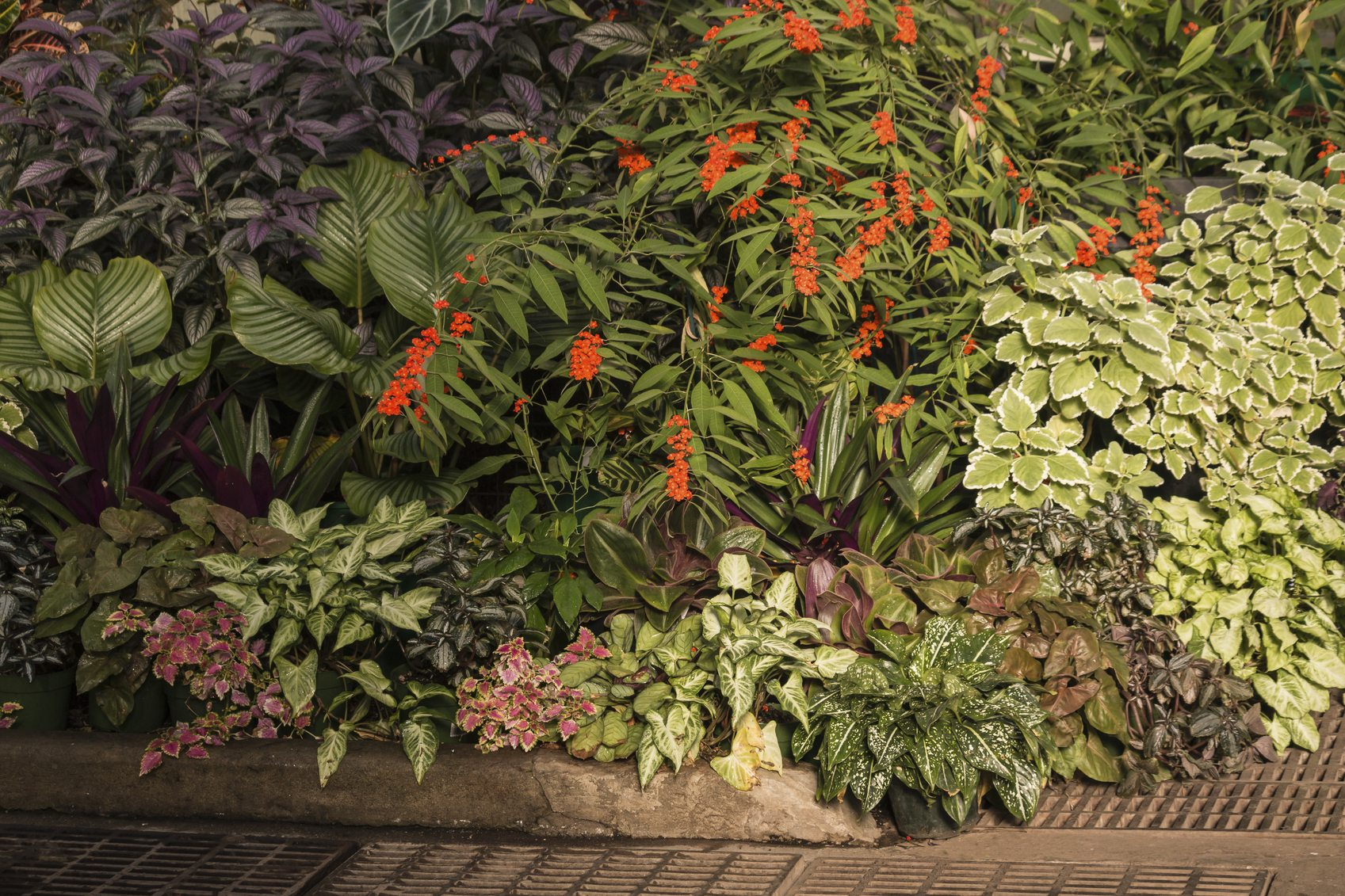 Tropical Shade Garden Plants: Tips On Creating A Tropical Shade Garden