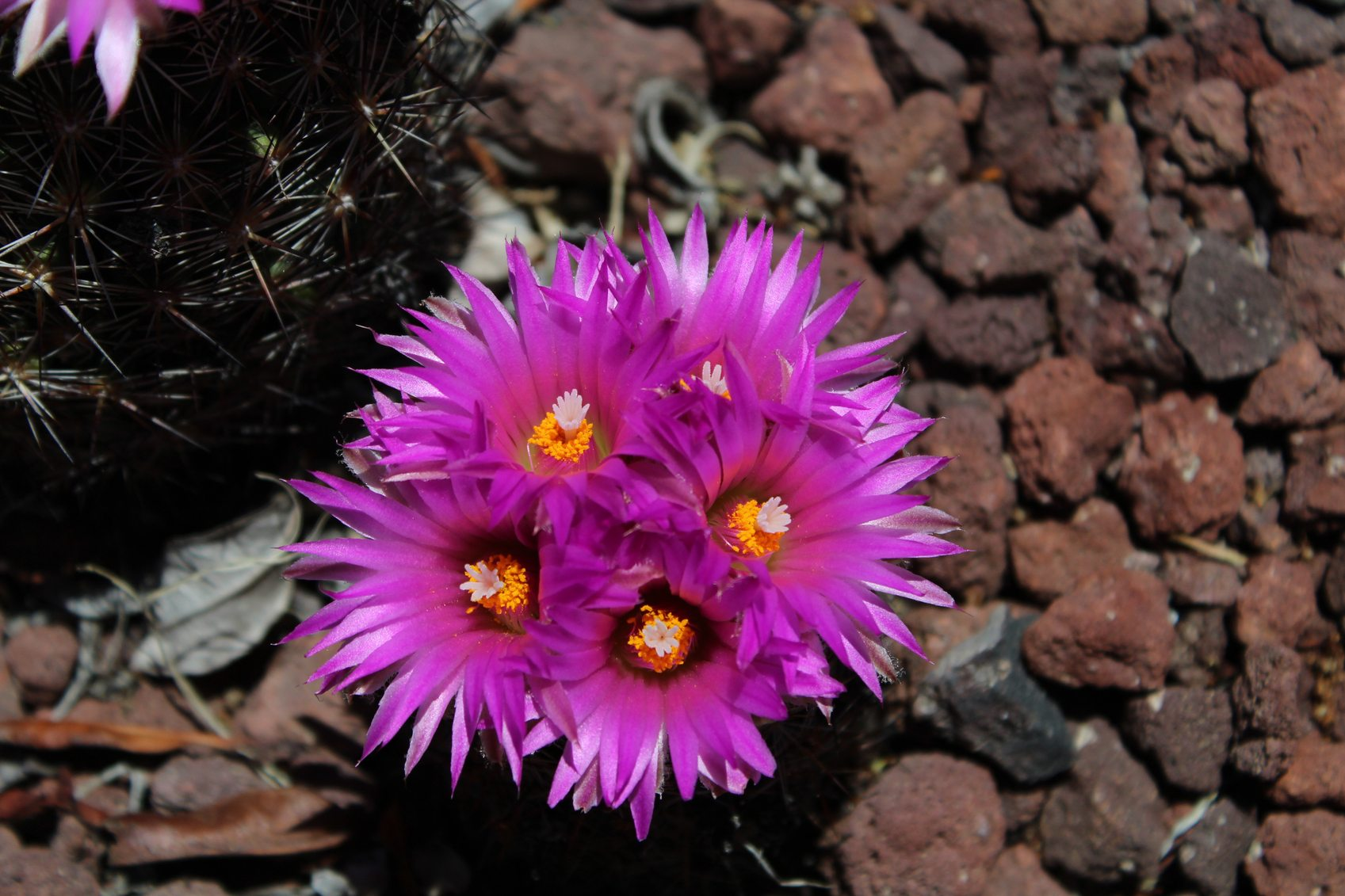 Growing Cactus In Cold Climates