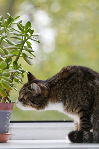 How To Protect Indoor Plants From Cats