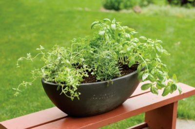 Growing Herb Plants Together Best Herbs To Grow In A Pot