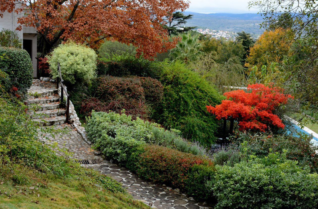 Choosing Plants For Sloping Areas What Grow On Slopes
