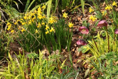 Exceptionnel Zone 5 Dry Shade Gardens: Growing Zone 5 Plants In Dry Shade