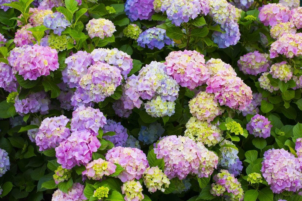 Hardy flowering plants annual and perennial flowers for zone 6 gardens zone 6zone mightylinksfo