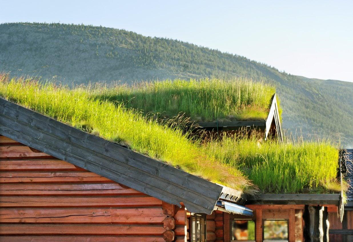 Green Roof Garden Designs How To Grow A Roof Garden