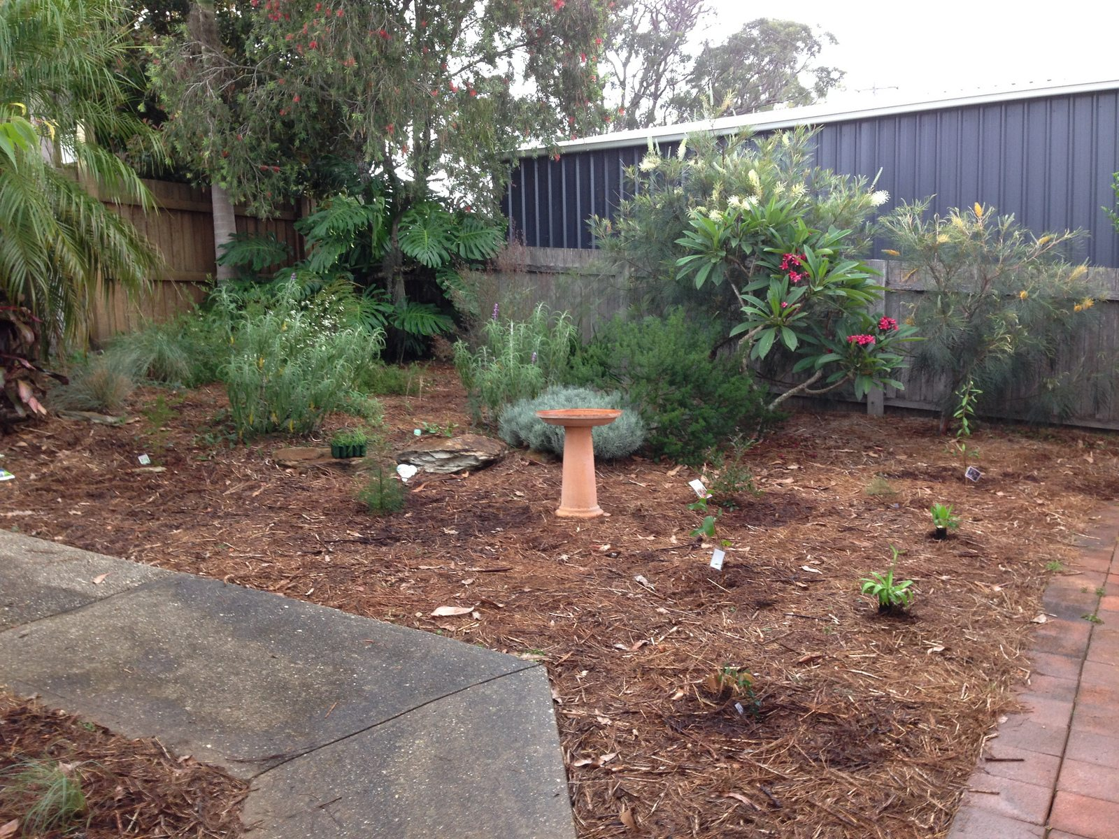 Tea Tree Mulch Benefits Tea Tree Mulch Uses In The Garden