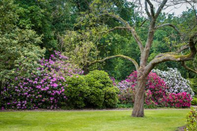 bushes for zone 7 gardens learn about growing shrubs in zone 7 gardens