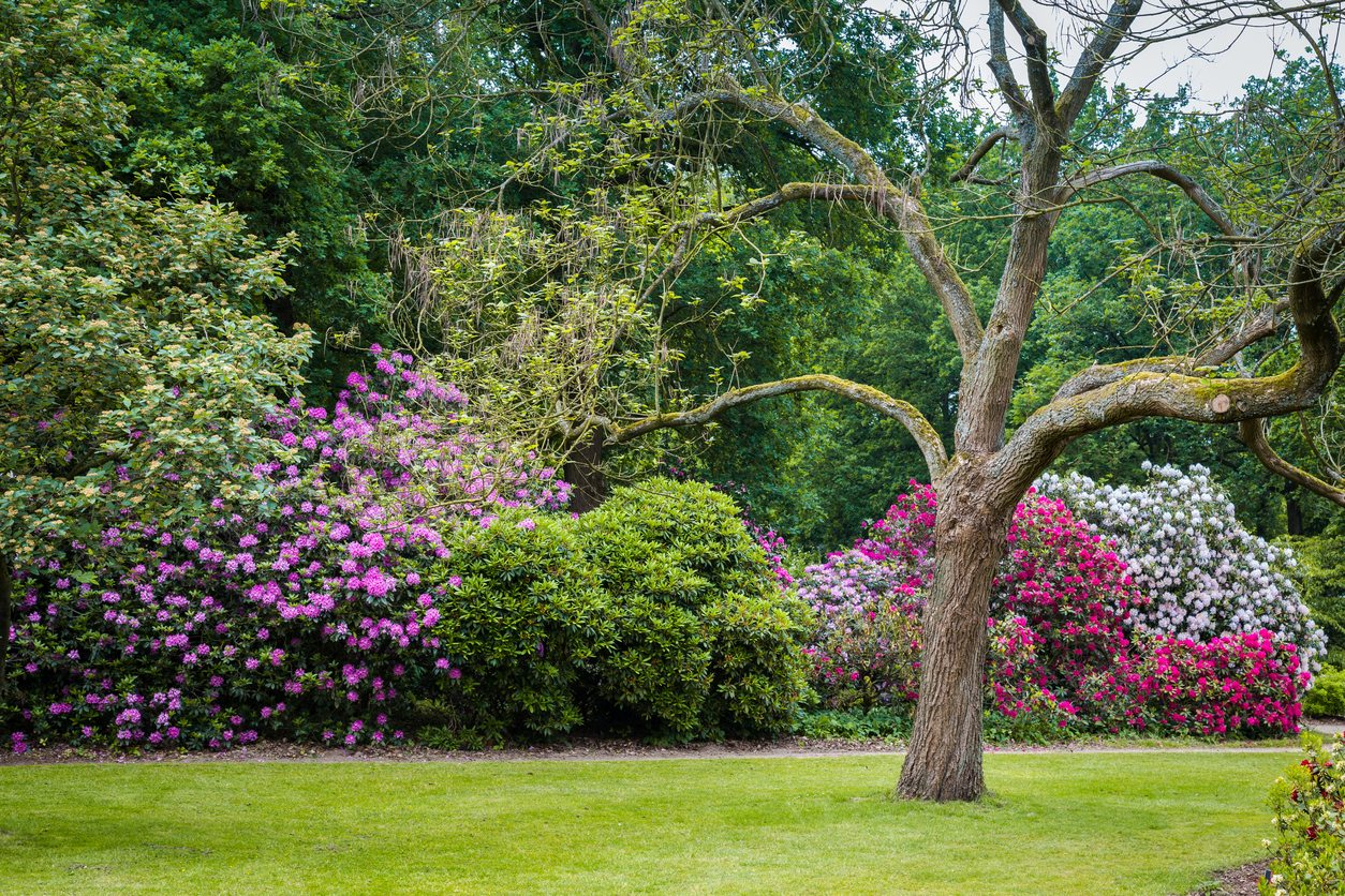 Hedge Bushes: Bushes For Zone 7 Gardens: Learn About Growing Shrubs In