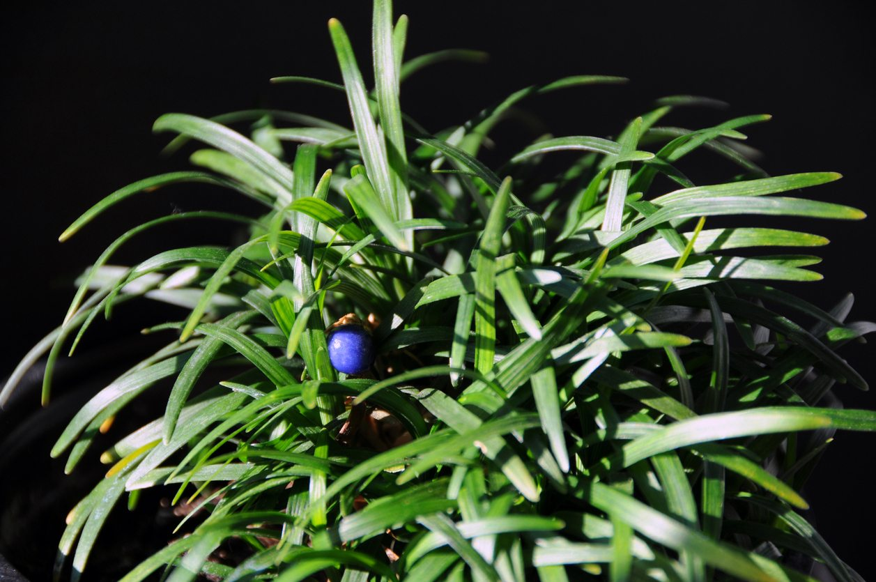 Hardy Evergreen Groundcover Plants Evergreen Groundcovers For Zone 7 Gardens