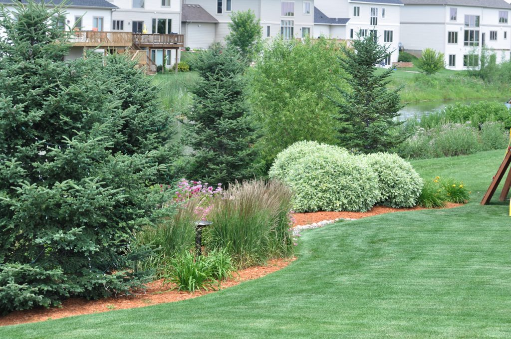 Zone 7 Evergreen Tree Varieties: Growing Evergreen Trees In Zone 7 Gardens