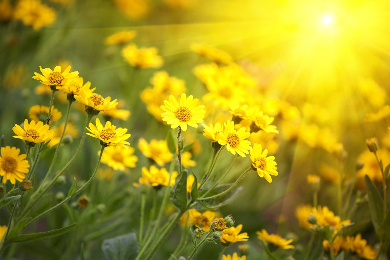 Plants For Zone 7 Full Sun Learn About Gardening In Direct Sunlight In Zone 7