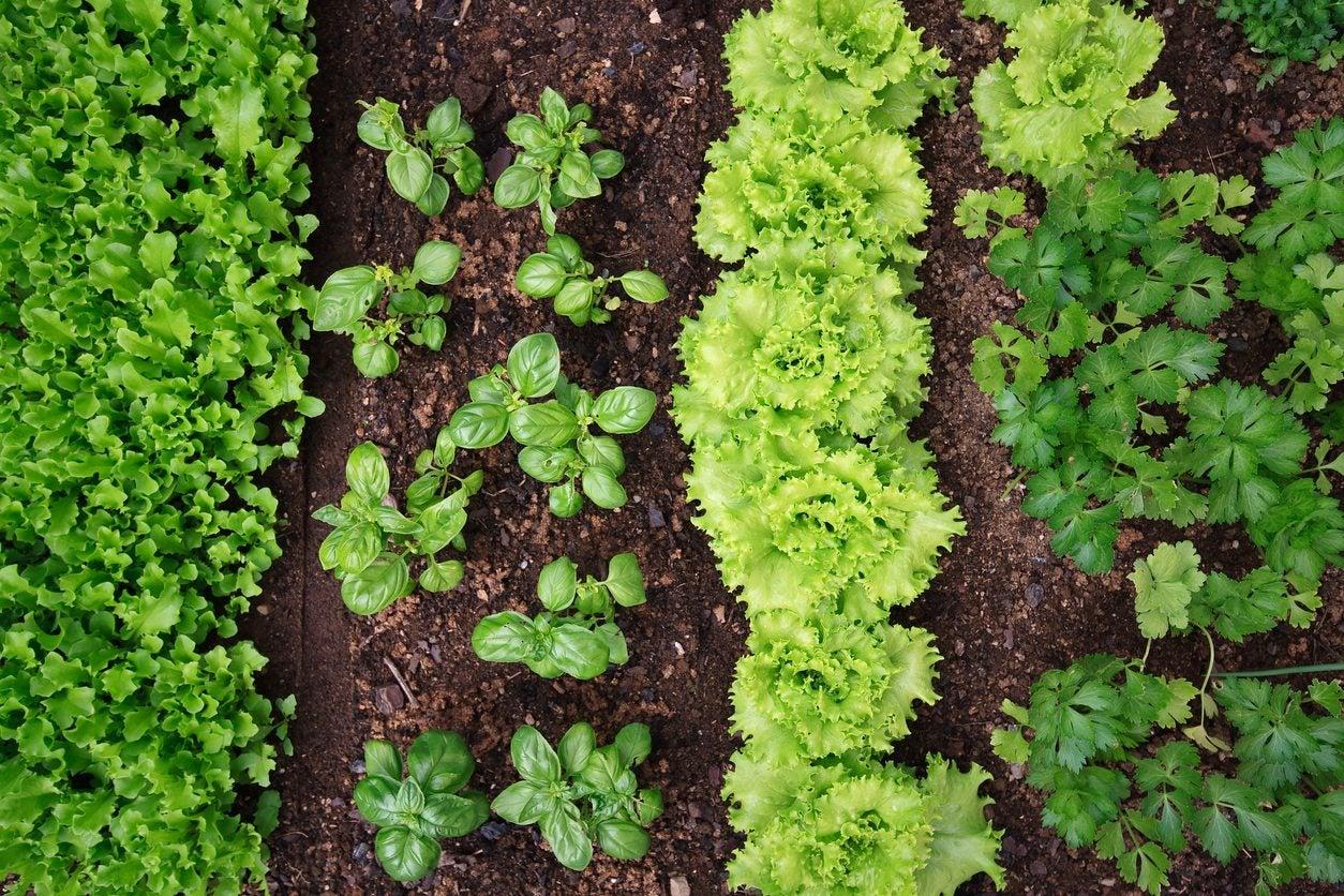 Roses In Garden: Vegetable Gardening For Zone 9