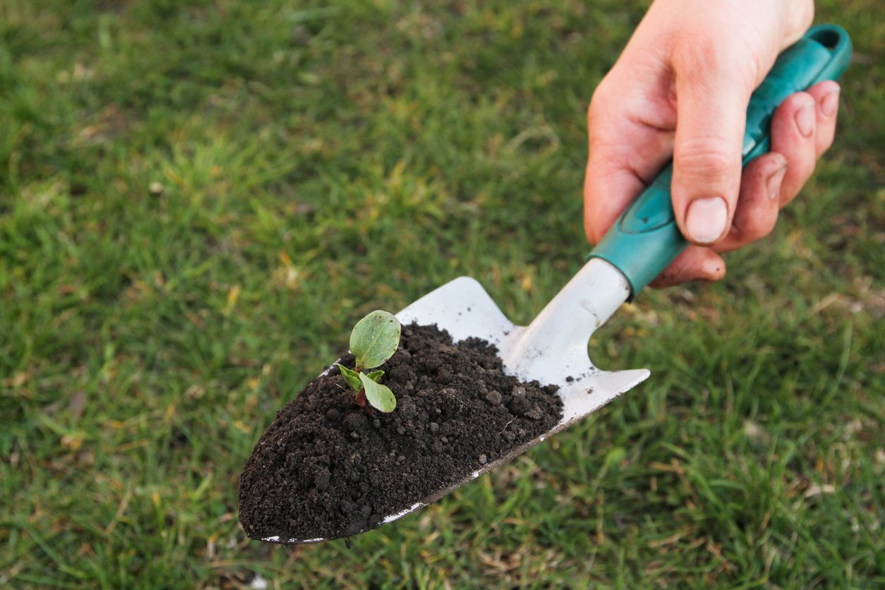 Using Gardening Trowels - When And How To Use A Trowel In The Garden