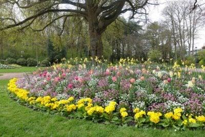 what is a mandala garden tips on building a mandala garden rh gardeningknowhow com mandala vegetable garden design