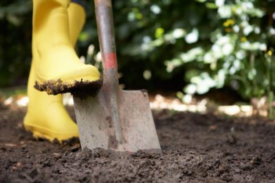 Exceptionnel Choosing Shovels For Gardens: What Shovel Do You Need For Gardening