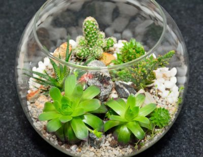 Succulent Terrarium Instructions Learn About Growing Succulent