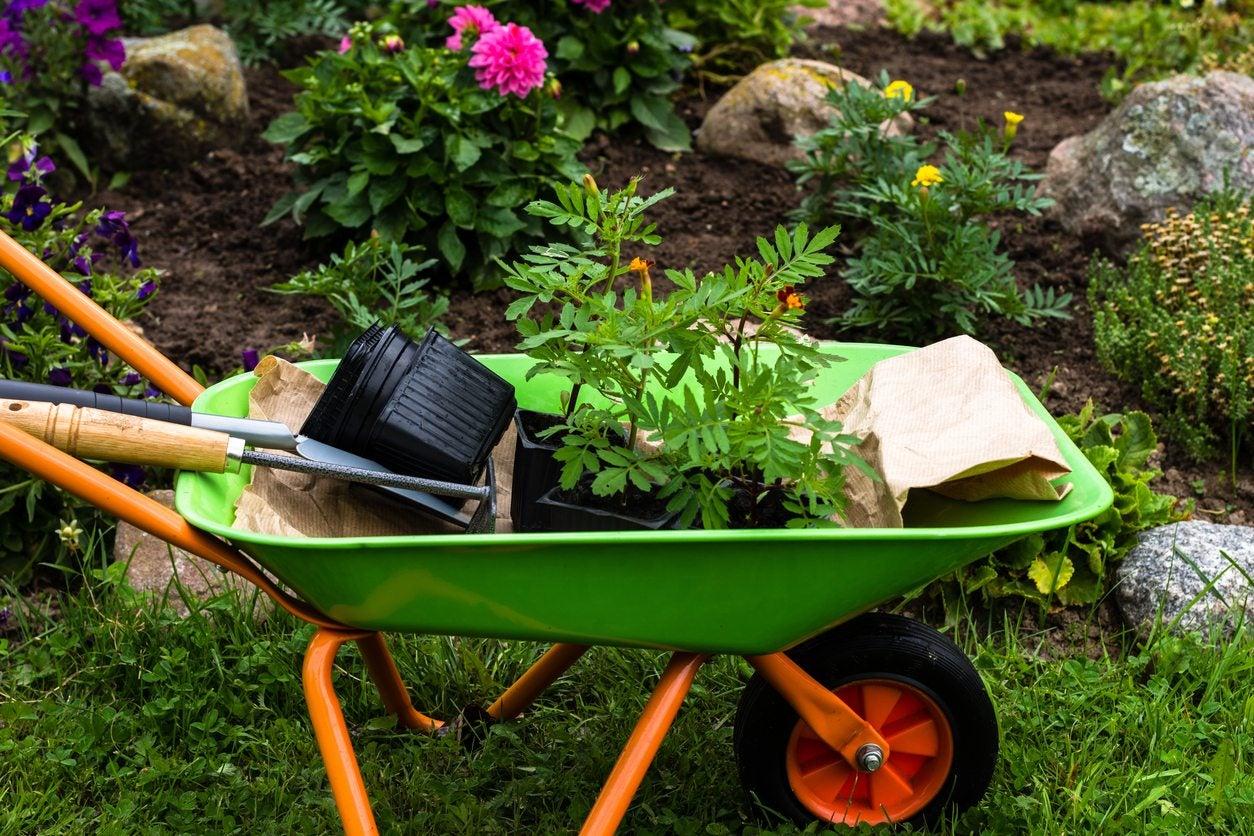Gentil Using Wheelbarrows In Gardens: How To Choose A Wheelbarrow For The Garden