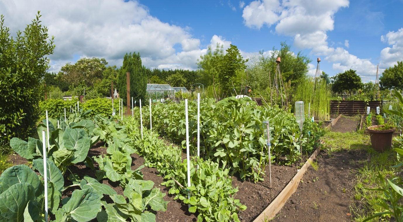 Zone 7 Vegetable Gardening Tips On Planting A Zone 7 Vegetable Garden