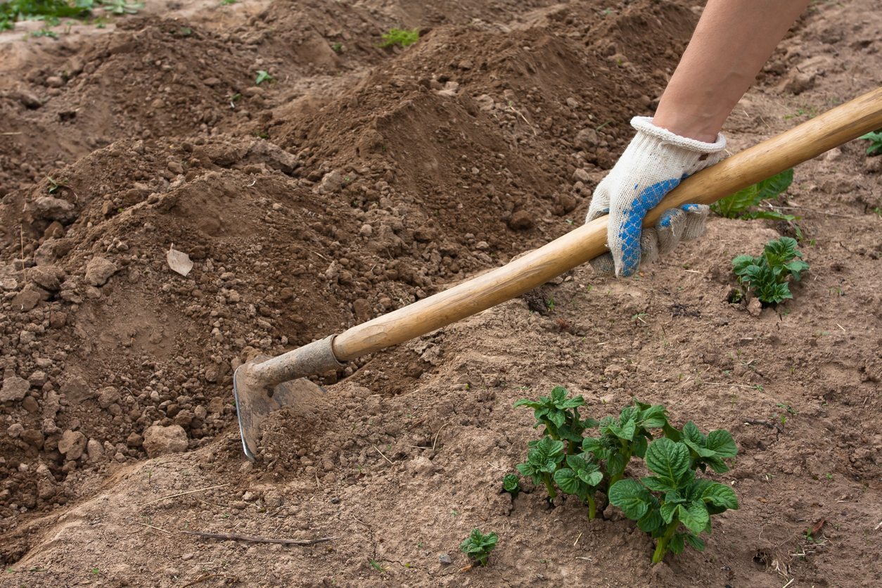 Different types of garden hoes uses for hoes in the garden for Gardening tools and their uses