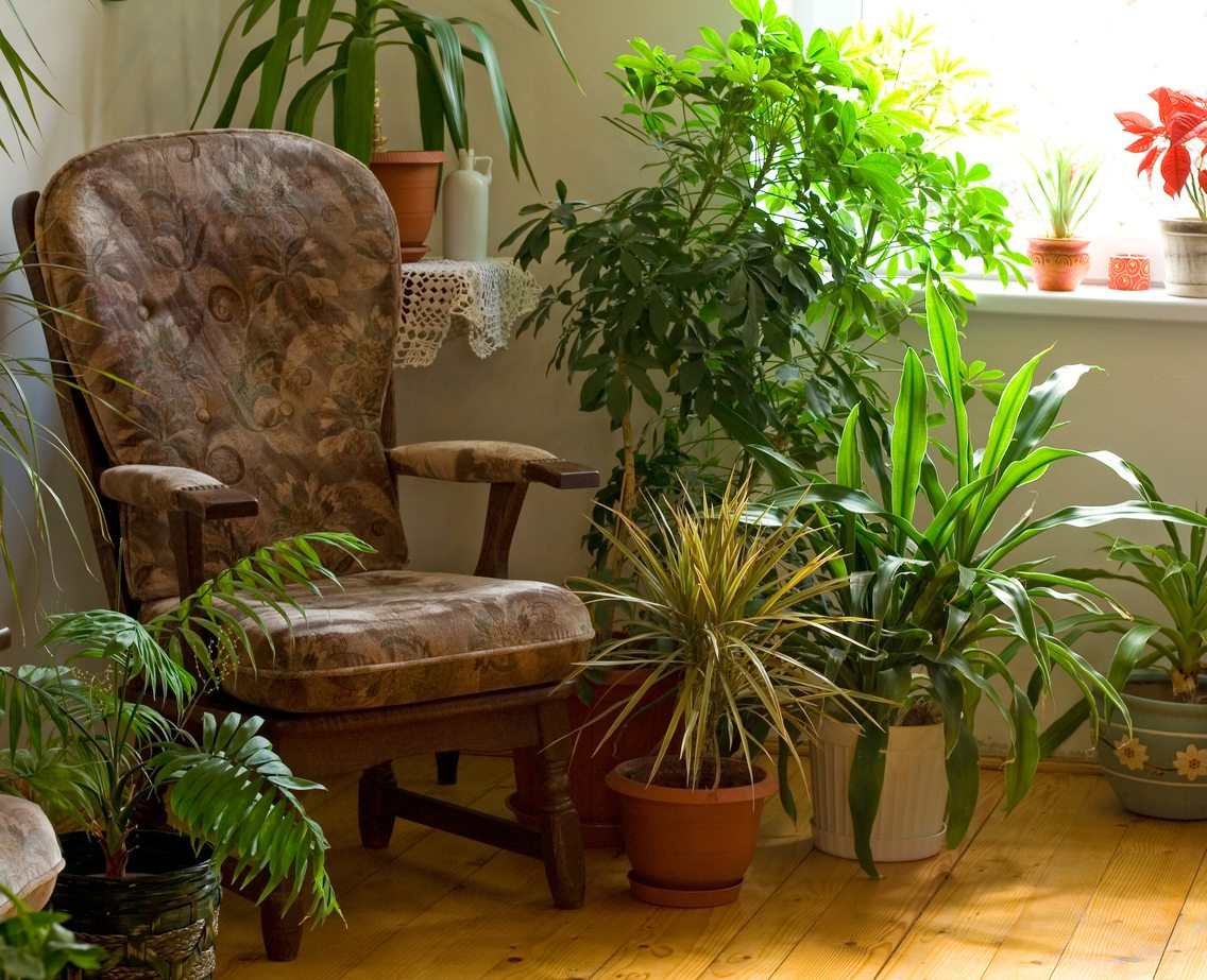 Living Room Houseplants Tips On Growing Plants In The Living Room