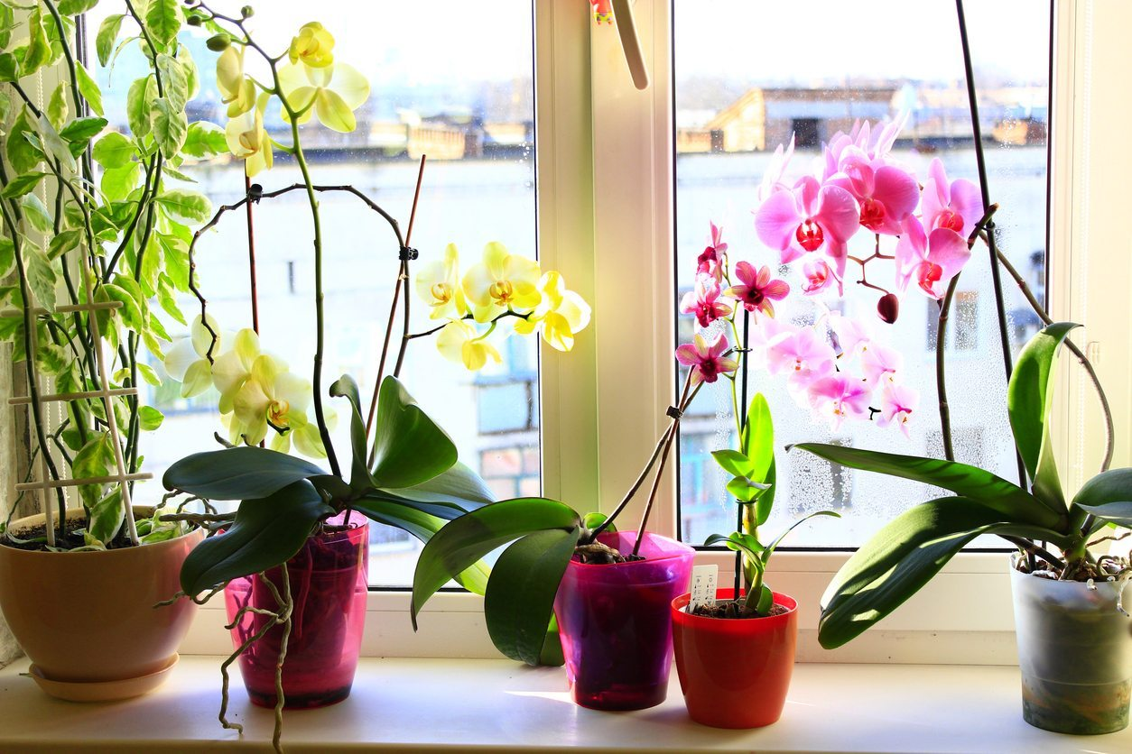 Growing Orchids In Containers: Do Orchids Need Special ...