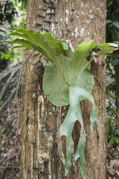 Care For Staghorn Ferns