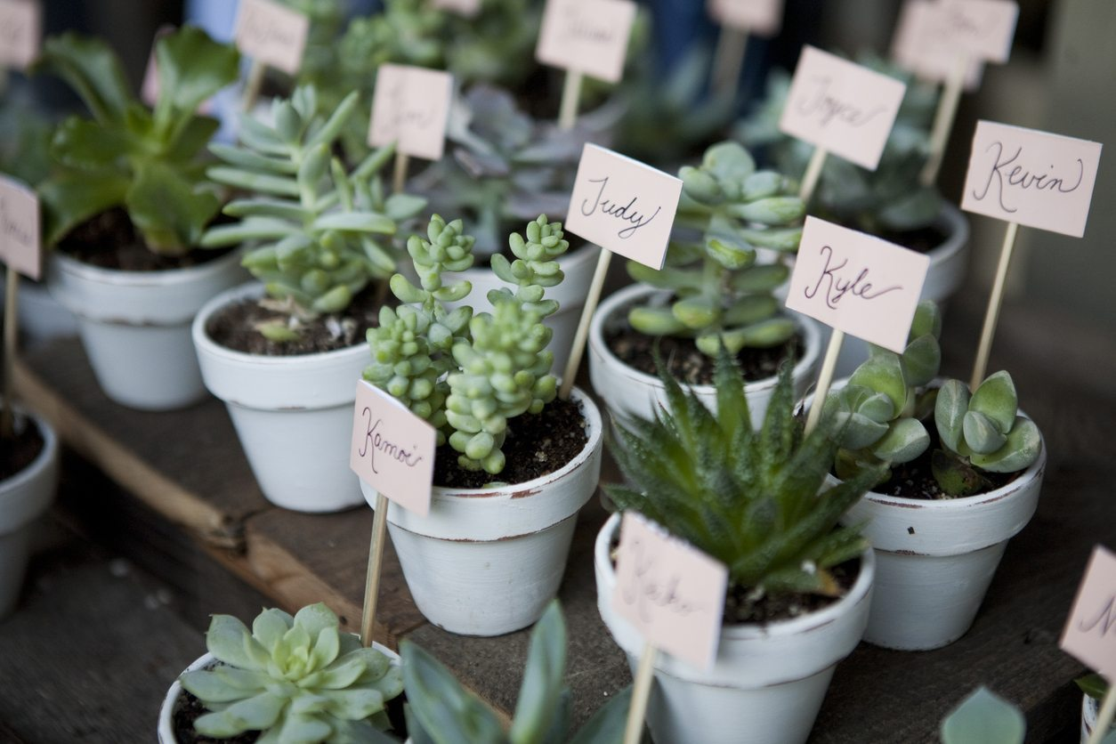 Wedding Plant Favors How To Grow Your Own Wedding Favors