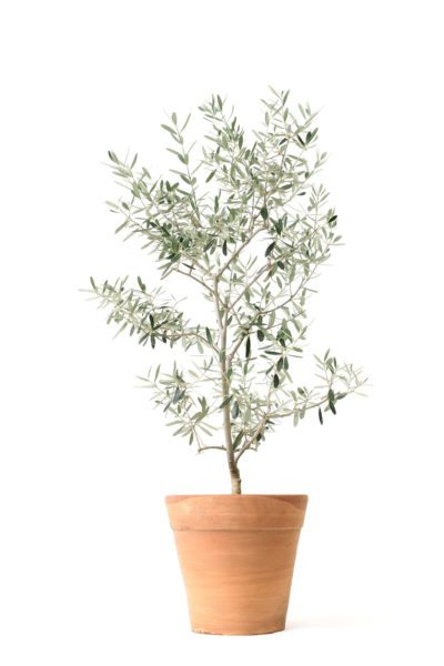 Wedding Gift Trees Can I Give A Tree As Present