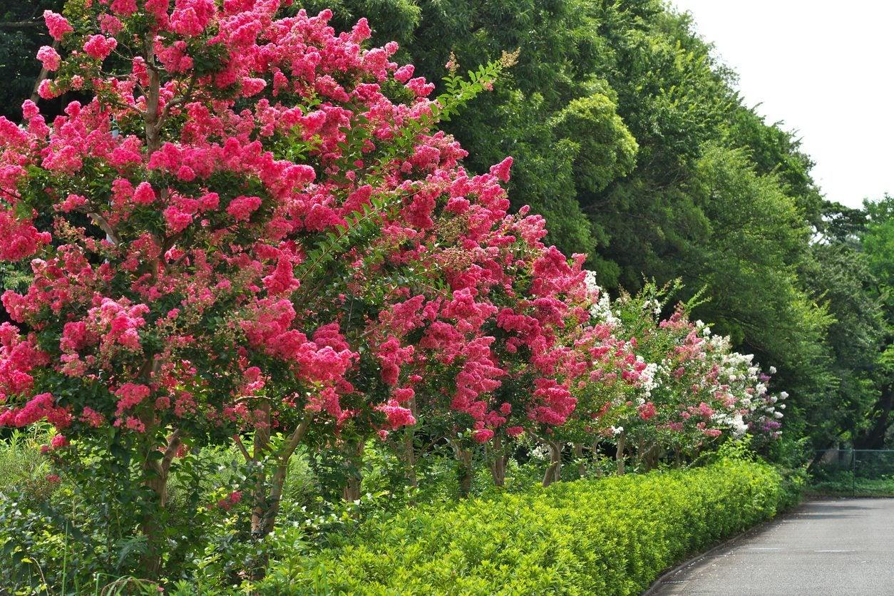 Zone 9 Full Sun Trees Growing Trees That Tolerate Full Sun