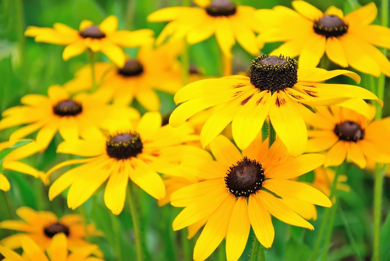 Choosing Plants For Full Sun In Zone 9 Learn About Sun Loving Zone