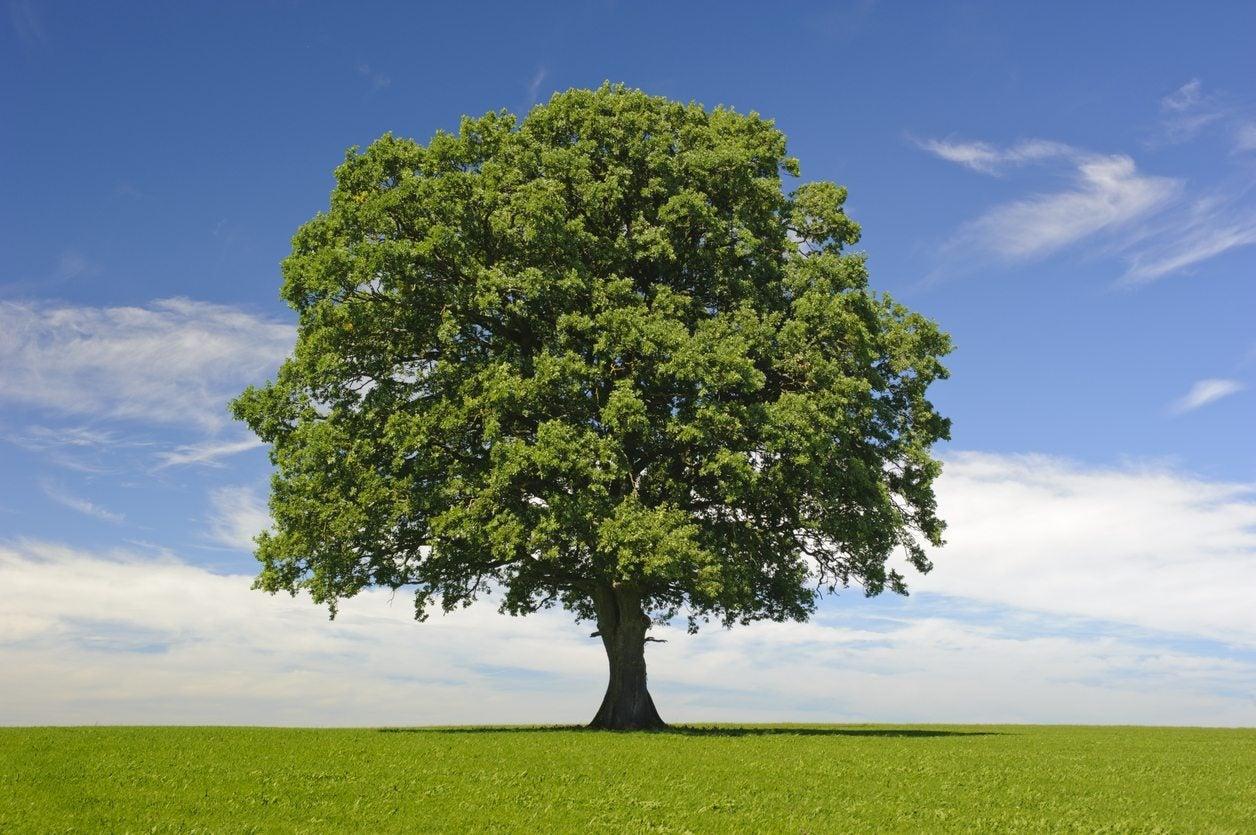 What Are Hardwood Trees Harwood Vs Softwood Tree Varieties