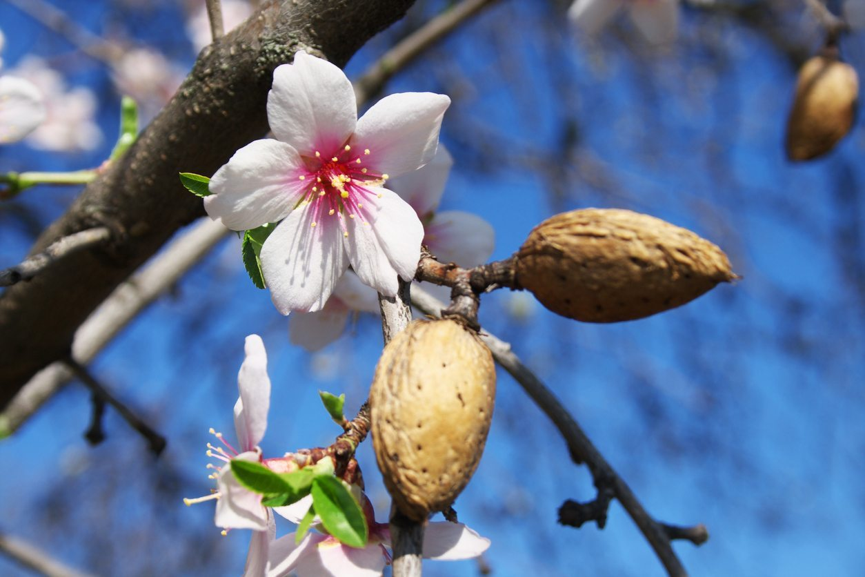 Treating trees in the spring from pests and diseases. Recipes for 8 fruit and berry plants 17