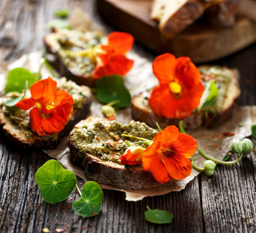 Harvesting Nasturtium Plants As Food Tips On Picking Edible Nasturtium Flowers,Lemon Drop Shots Recipe