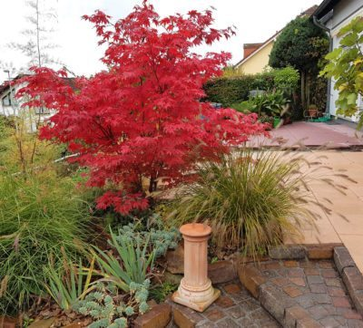 Japanese Maple Fertilizer Needs When To Fertilize