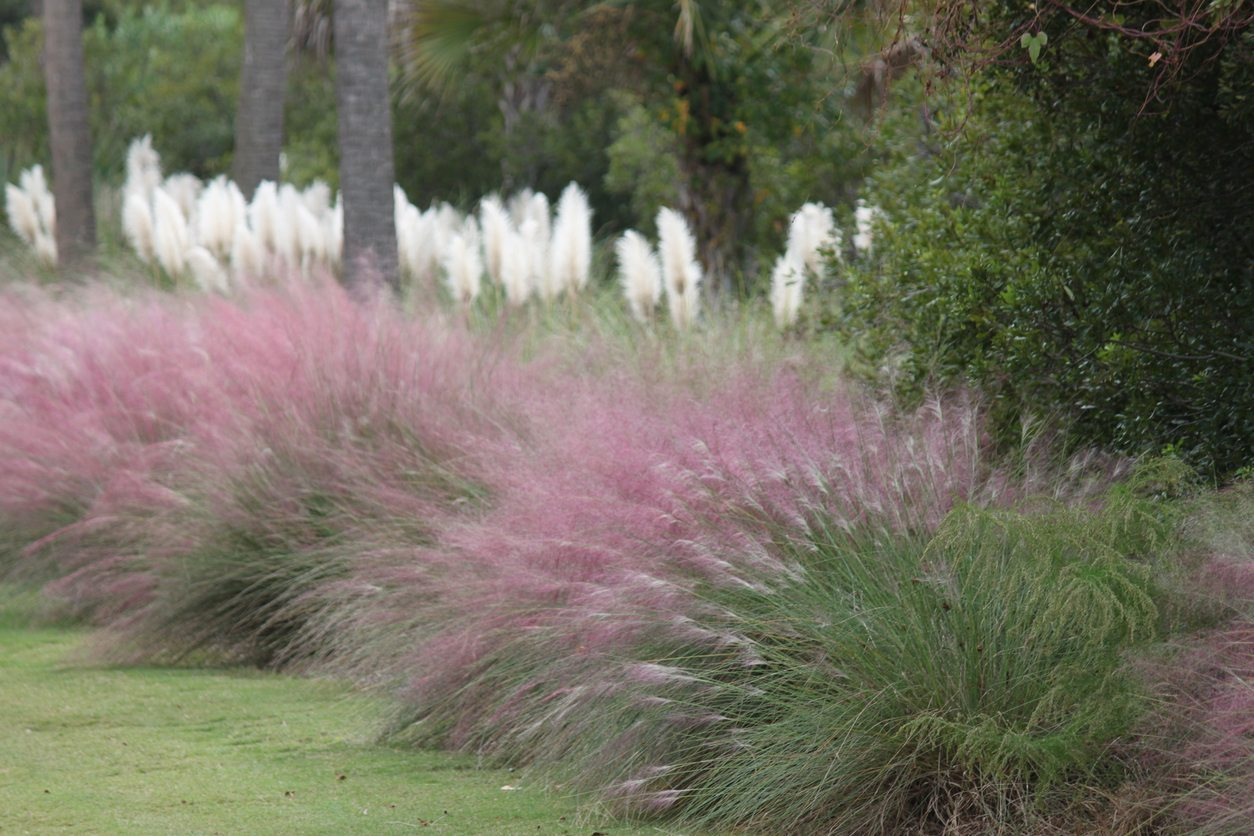 Ornamental Grass For Shade Gardens Choosing Shade Loving Ornamental Grass