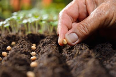 what does sow thinly mean a guide to thin seed spacing in gardens