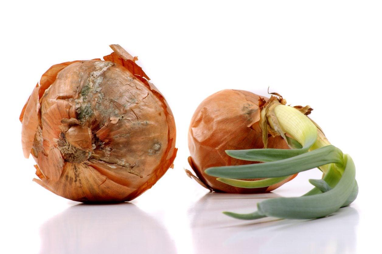 OnionsWhat ...