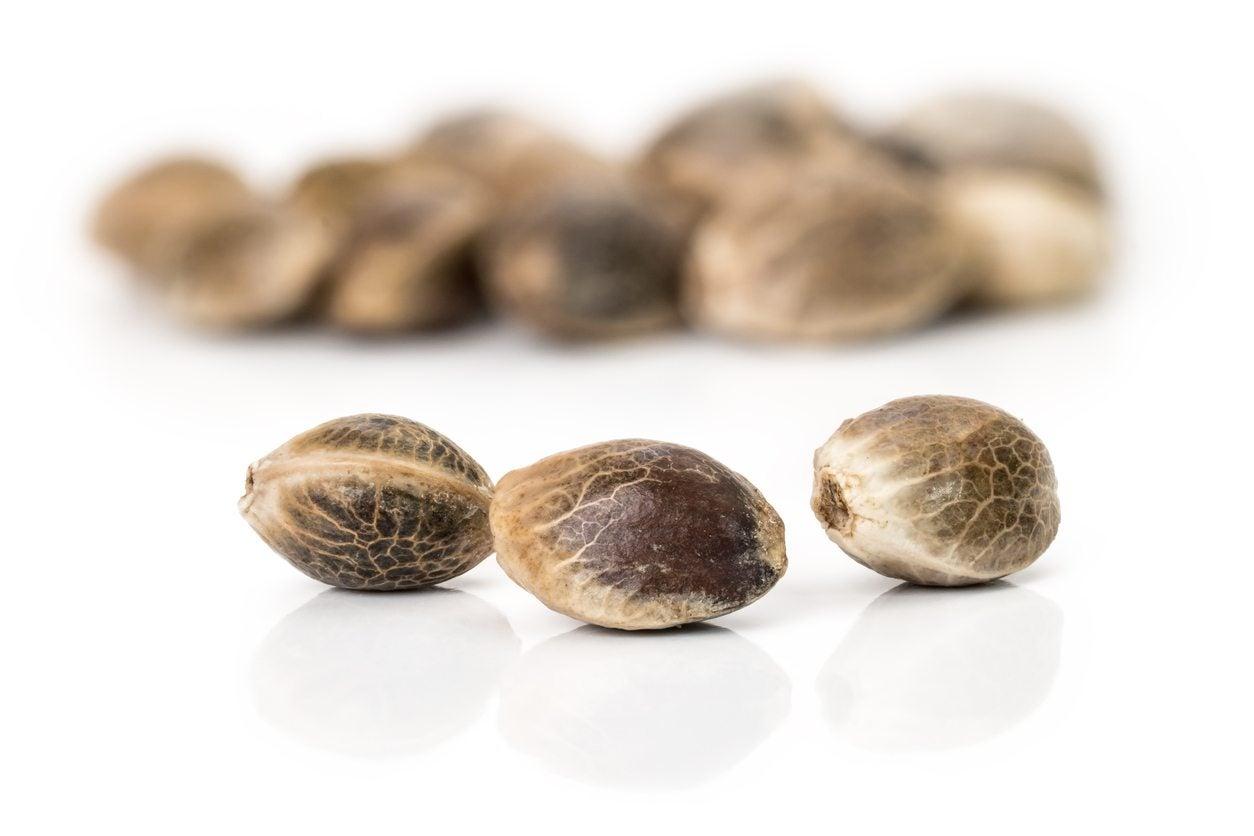 What Is Hemp Seed Tips For Growing Hemp In The Garden