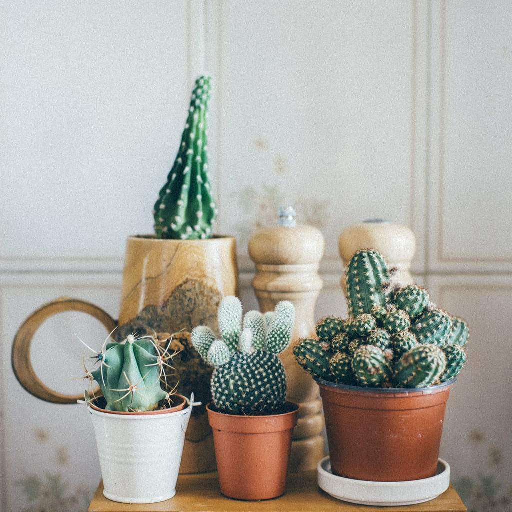 Feeding Succulents And Cacti Learn When To Feed Cacti And Succulents