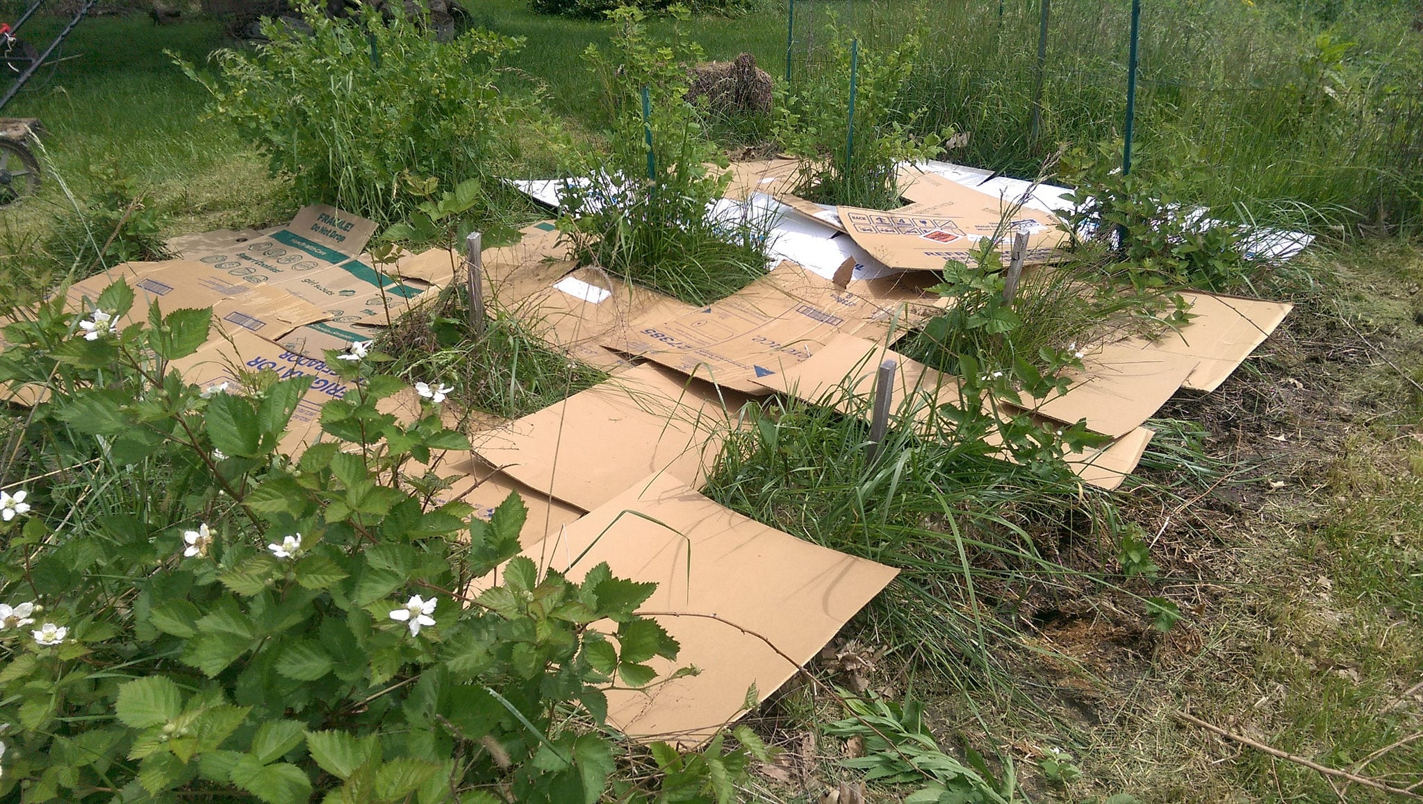 Garden Upcycling With Cardboard: How To Use Cardboard In The Garden