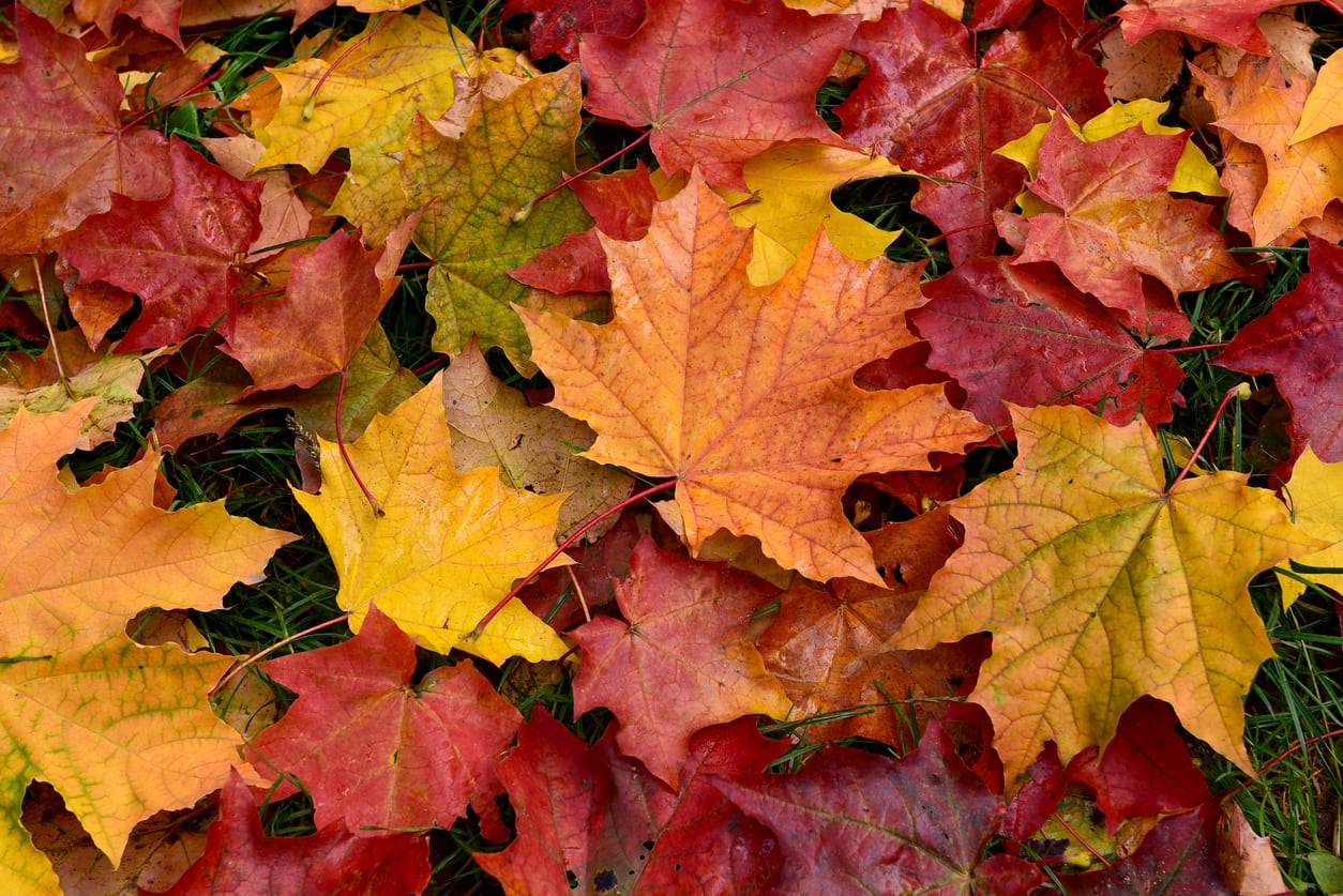 Autumn Leaf Uses And Disposal: How To Get Rid Of Fallen Leaves In Autumn