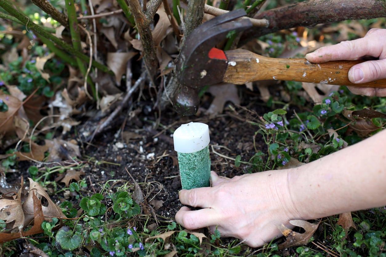 Are Fruit Tree Fertilizer Spikes Effective When Should You Fertilize Fruit Trees With Spikes