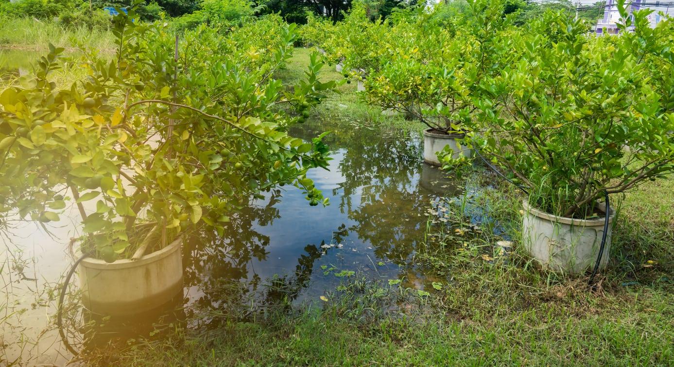 Fruit Trees That Grow In Wet
