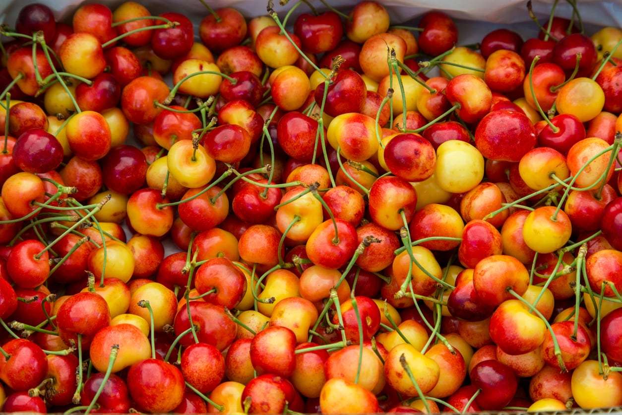 Growing Rainier Cherries: Care Of Rainier Cherry Trees