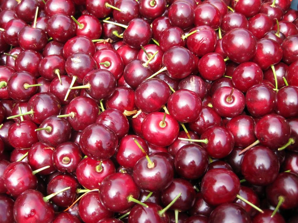 Morello Sour Cherry Trees For Sale Uk Grown Ashridge Nurseries