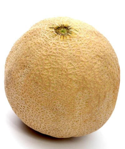 Athena Melon Care Growing Athena Melons In The Garden A real cantaloupe, or at least the original bearer of the name, is a european cantaloupe. athena melon care growing athena
